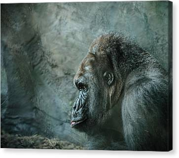 Gorilla Canvas Print - Captive Cousin by WildePics Photography Inc