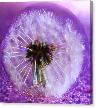 Captured Wish Canvas Print by Krissy Katsimbras
