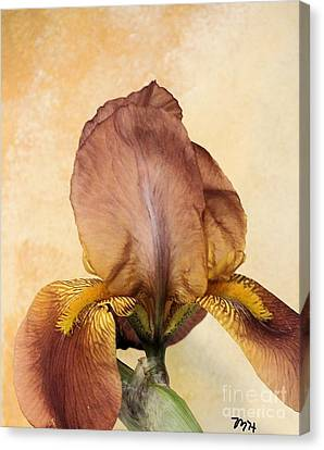 Curtains Canvas Print - Caramel Iris by Marsha Heiken