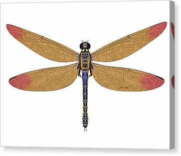 Meganeura Canvas Print - Carboniferous Meganeura Dragonfly by Corey Ford