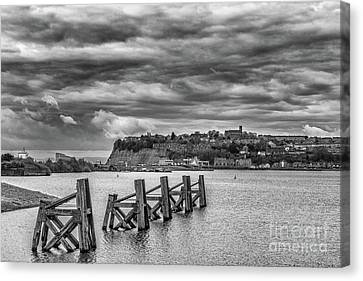 Cardiff Bay Dolphins Mono Canvas Print by Steve Purnell