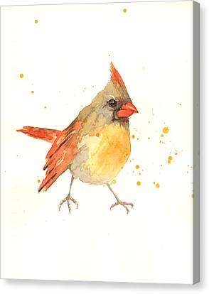 Cardinal - Female Cardinal Canvas Print by Alison Fennell