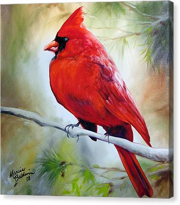 Canvas Print - Cardinal 18 by Marcia Baldwin