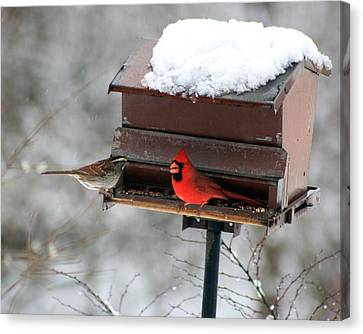 Cardinal And Sparrow At Feeder Canvas Print