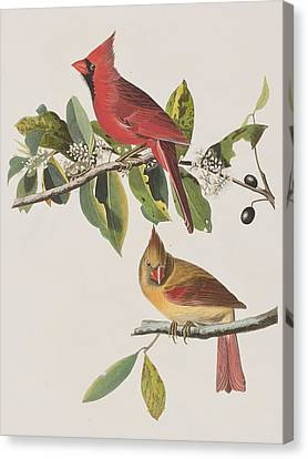 Cardinal Grosbeak Canvas Print by John James Audubon