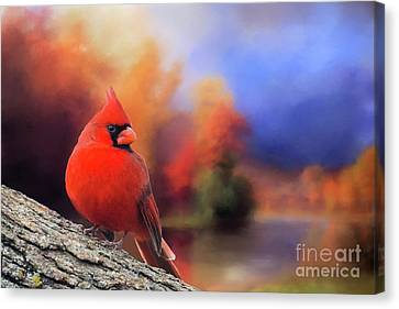 Cardinal In Autumn Canvas Print by Janette Boyd