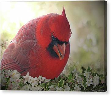 Canvas Print featuring the photograph Cardinal In Flowers by Debbie Portwood