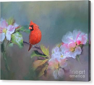 Kathy Rinker Canvas Print - Cardinal Morning by Kathleen Rinker
