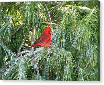 Cardinal On Ice Canvas Print