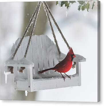 Cardinal On Swing In Snow Storm Canvas Print by Terry DeLuco