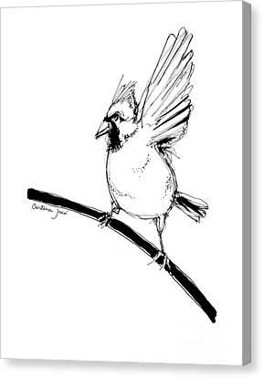 Cardinal Pen Drawing Canvas Print