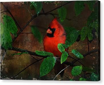 Cardinal Canvas Print by Perry Van Munster