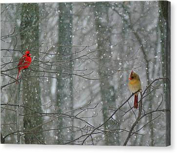 Cardinals In Snow Canvas Print by Serina Wells