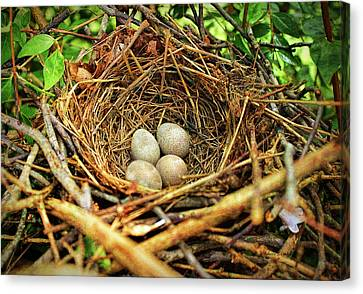 Canvas Print featuring the photograph Brown Thrasher Nest And Eggs by Bellesouth Studio