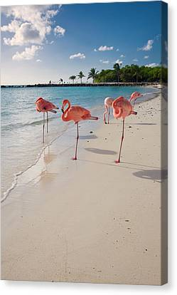 Caribbean Beach With Pink Flamingos Canvas Print by George Oze