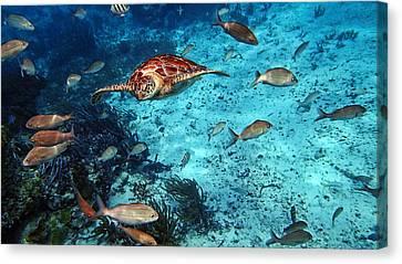 Caribbean Blue_10 Canvas Print