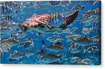 Caribbean Blue_12 Canvas Print