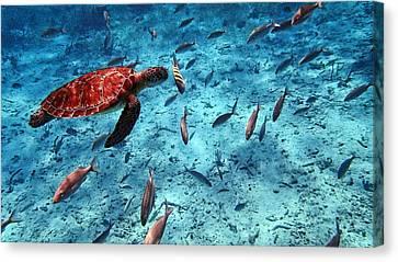 Caribbean Blue_4 Canvas Print