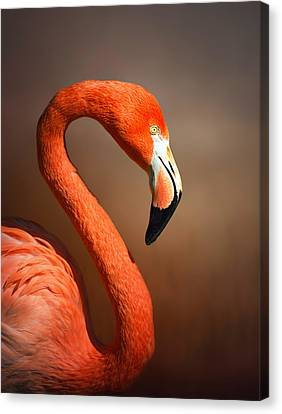 Caribean Flamingo Portrait Canvas Print by Johan Swanepoel