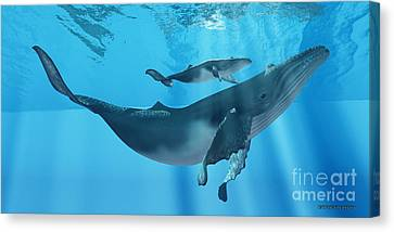 Caring Mother Humpback Canvas Print