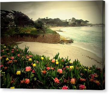 Carmel Beach And Iceplant Canvas Print