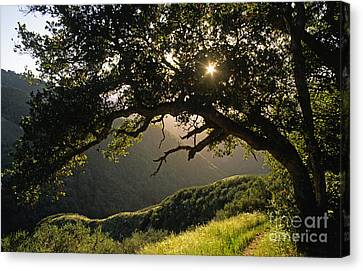 Carmel-valley-32-20 Canvas Print