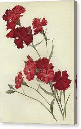 Carnations Canvas Print by English School