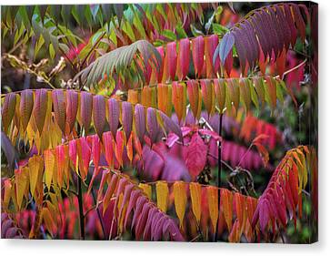 Canvas Print featuring the photograph Carnival Of Autumn Color by Bill Pevlor