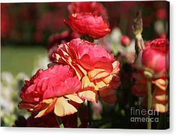 Carnival Of Flowers 03 Canvas Print by Andrea Jean