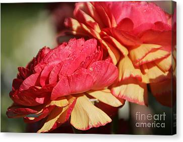 Carnival Of Flowers 05 Canvas Print by Andrea Jean