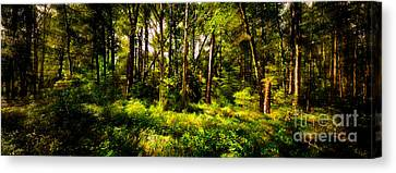 Carolina Forest Canvas Print