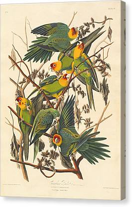 Wings Canvas Print - Carolina Parrot by Dreyer Wildlife Print Collections