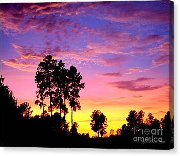 Carolina Pine Sunset Canvas Print by Patricia L Davidson