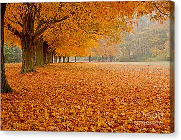 March Of The Maples Canvas Print