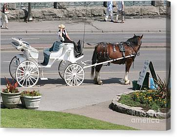 Carriage Horse Ride  Canvas Print by Chuck Kuhn