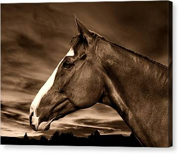 Carsen Sepia Canvas Print by Irma BACKELANT GALLERIES