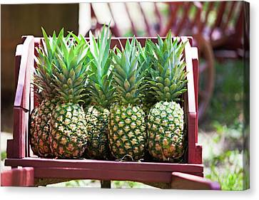 Cart Of Pineapples Canvas Print by Walt Stoneburner