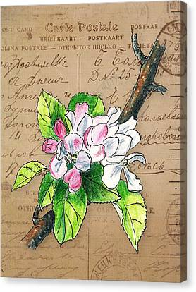 Carte Postale. Blossoming Apple Canvas Print