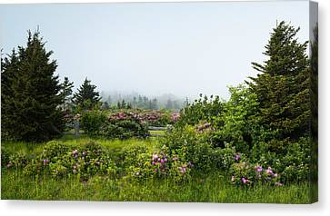 Carvers Gap Pisgah Cherokee National Forest Appalachian Trail Canvas Print