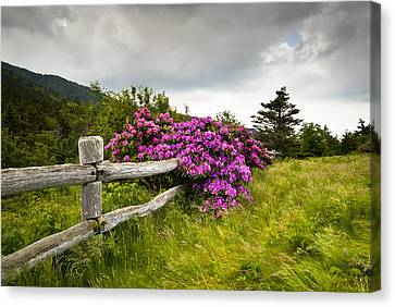 Fuchsia Canvas Print - Carvers Gap Roan Mountain State Park Highlands Tn Nc by Dave Allen