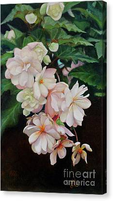 Cascade Of Begonias  Canvas Print by Margit Sampogna