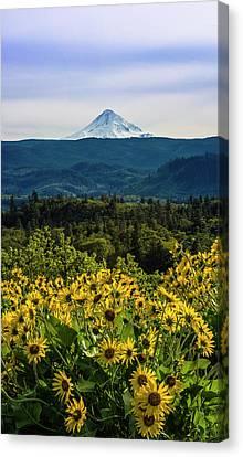 Cascade Spring Canvas Print
