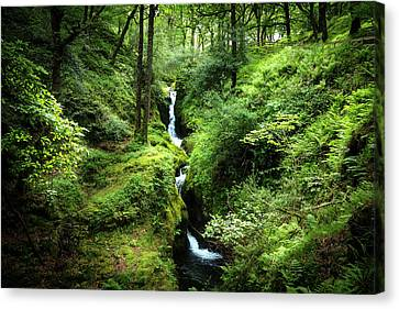 Cascades In The Forest Of Glendalough Canvas Print by Debra and Dave Vanderlaan