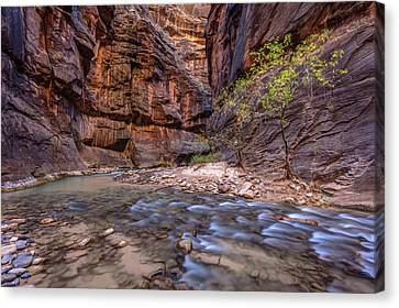 Canvas Print featuring the photograph Cascades In The Narrows Of Zion by Pierre Leclerc Photography
