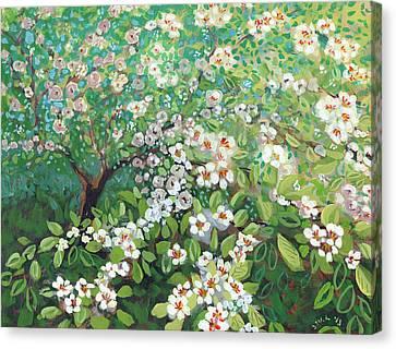Dogwood Canvas Print - Cascading by Jennifer Lommers