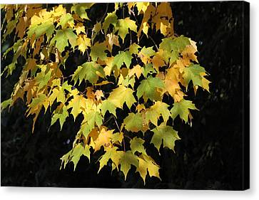 Canvas Print featuring the photograph Cascading Leaves by Doris Potter
