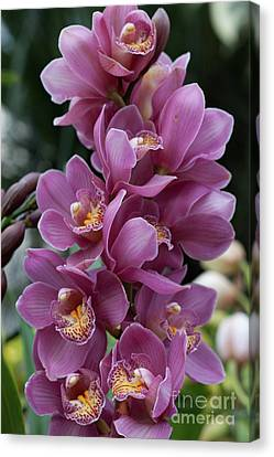 Cascading Orchids Canvas Print