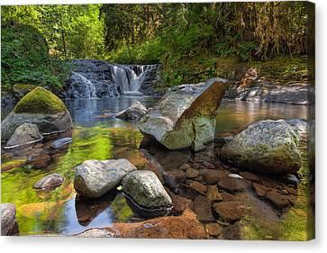 Cascading Waterfall At Sweet Creek Falls Trail Canvas Print by David Gn