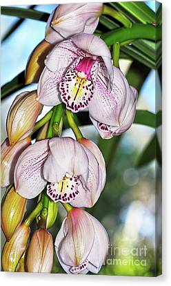 Cascading White Orchids By Kaye Menner Canvas Print by Kaye Menner