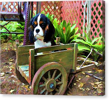 Casey In The Cart Canvas Print by Patricia Stalter